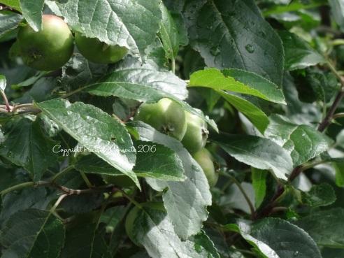 bledina fruits