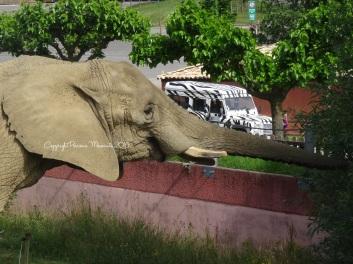 Les éléphants... Un grand moment !