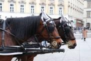 chevaux-caleche
