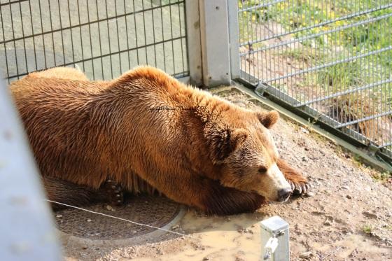 fosse au ours berne