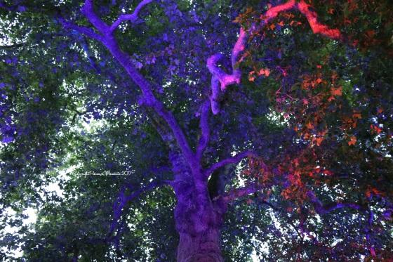 arbre de la liberté bayeux