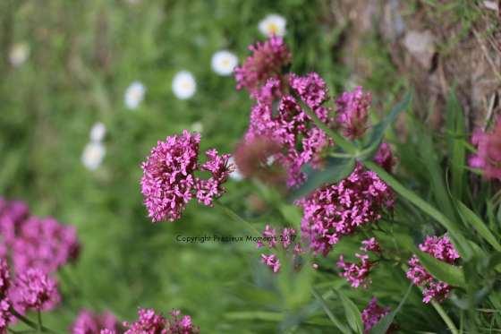 fleurs chateau fougeres