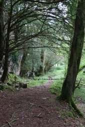 chemin muckross killarney