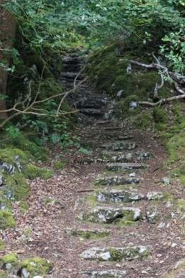 escalier muckross parc