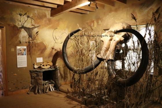 squelette tete mammouth irlande